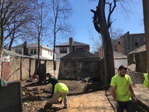 Brooklyn Tree Company