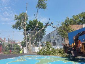 Tarzan Tree Removal LLC Tree Removal Brooklyn