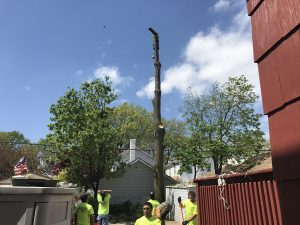 Welcome to Brooklyn Tree Removal