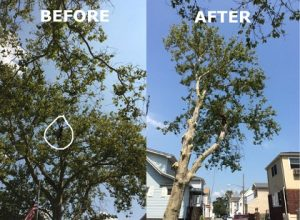 Book an Appointment - Tree Service BROOKLYN